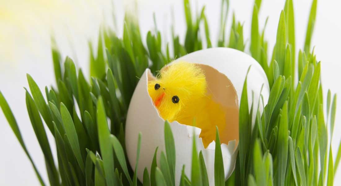 Pääsiäisruoho herättää kevääseen