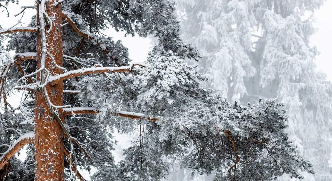 Näetkö puun metsältä?